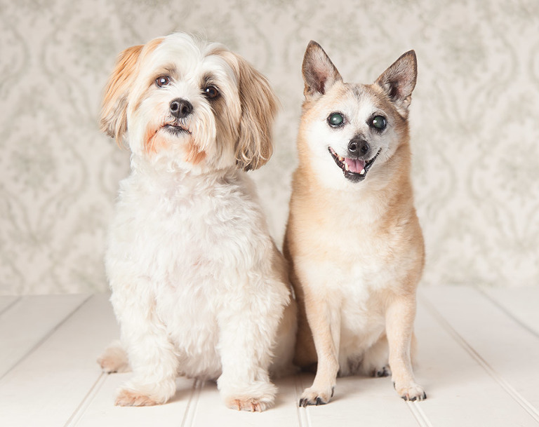 Dog and Pet Photography Melbourne